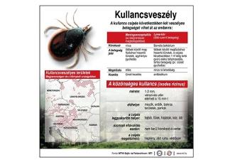 paraziták sebekben)