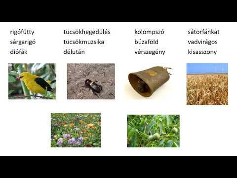 gyógyszerek a pinwormokhoz pinwormok