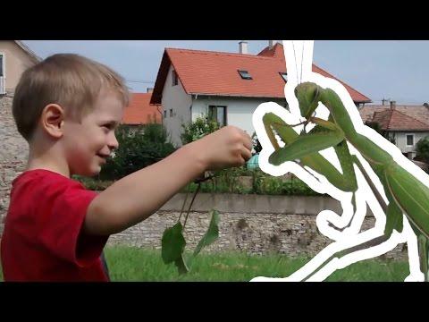 paraziták a zöldségeken