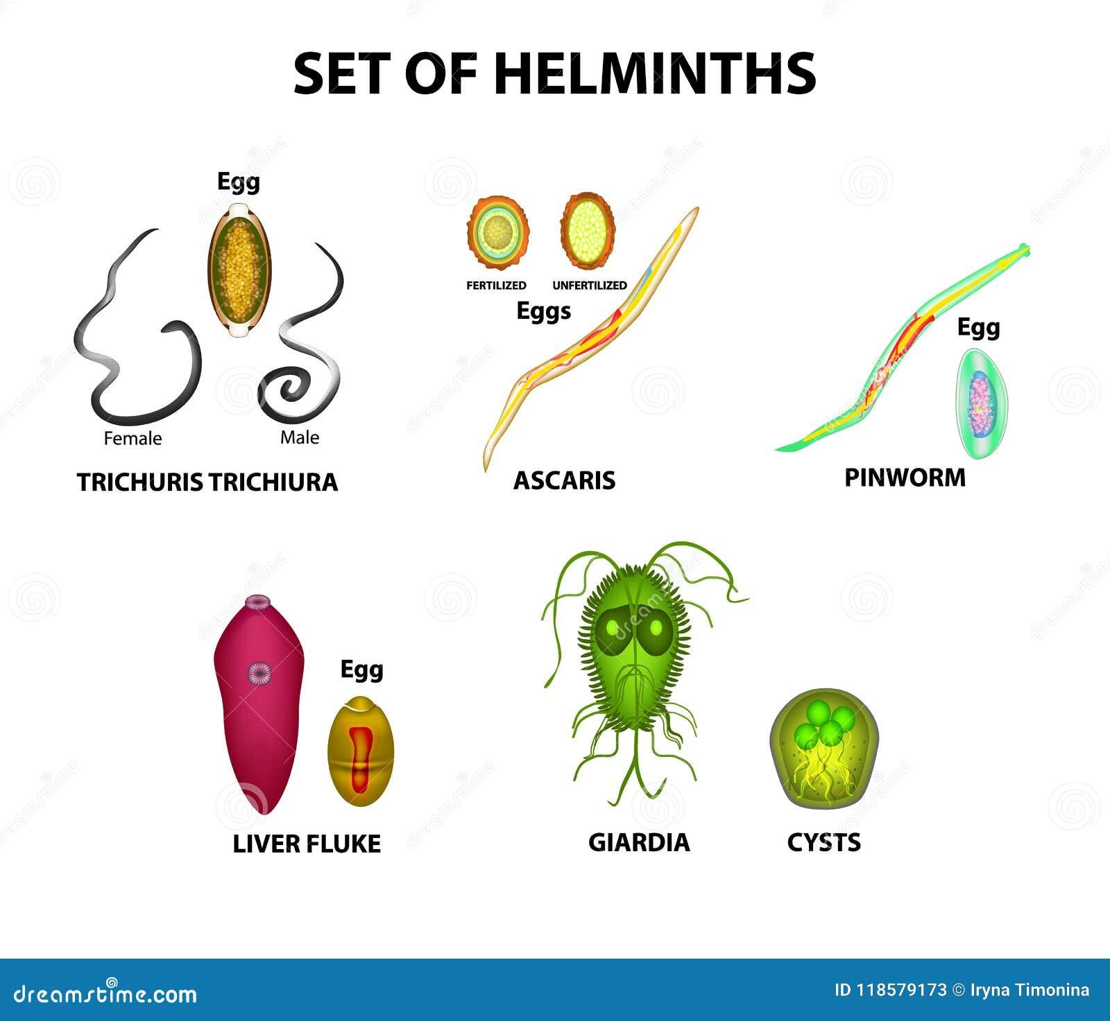 a pinworm és a roundworm tünetei