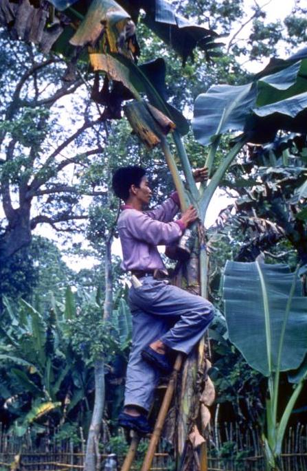 Parazita elephantiasis - egry-keszthely.hu