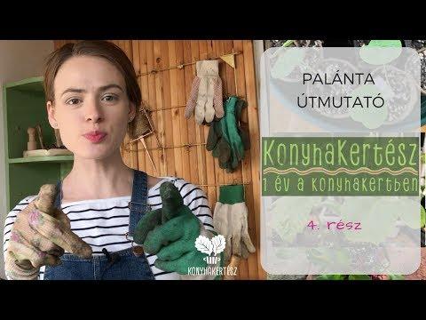 Hatékony parazitakezelő fórum, Detoxic Magyarország Akinek férgek fóruma volt