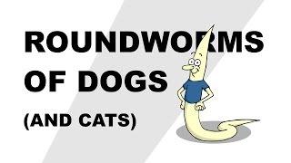 különbség a pinwormák és a roundworms között)