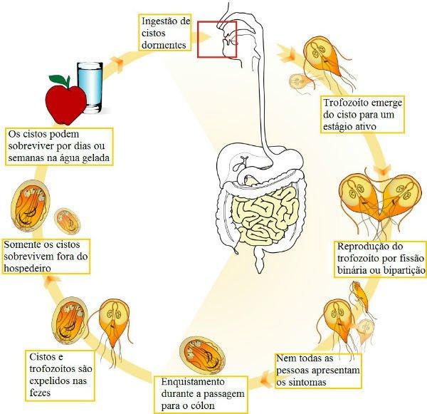pinworm enuresis a paraziták megelőzésére szolgáló eszközök