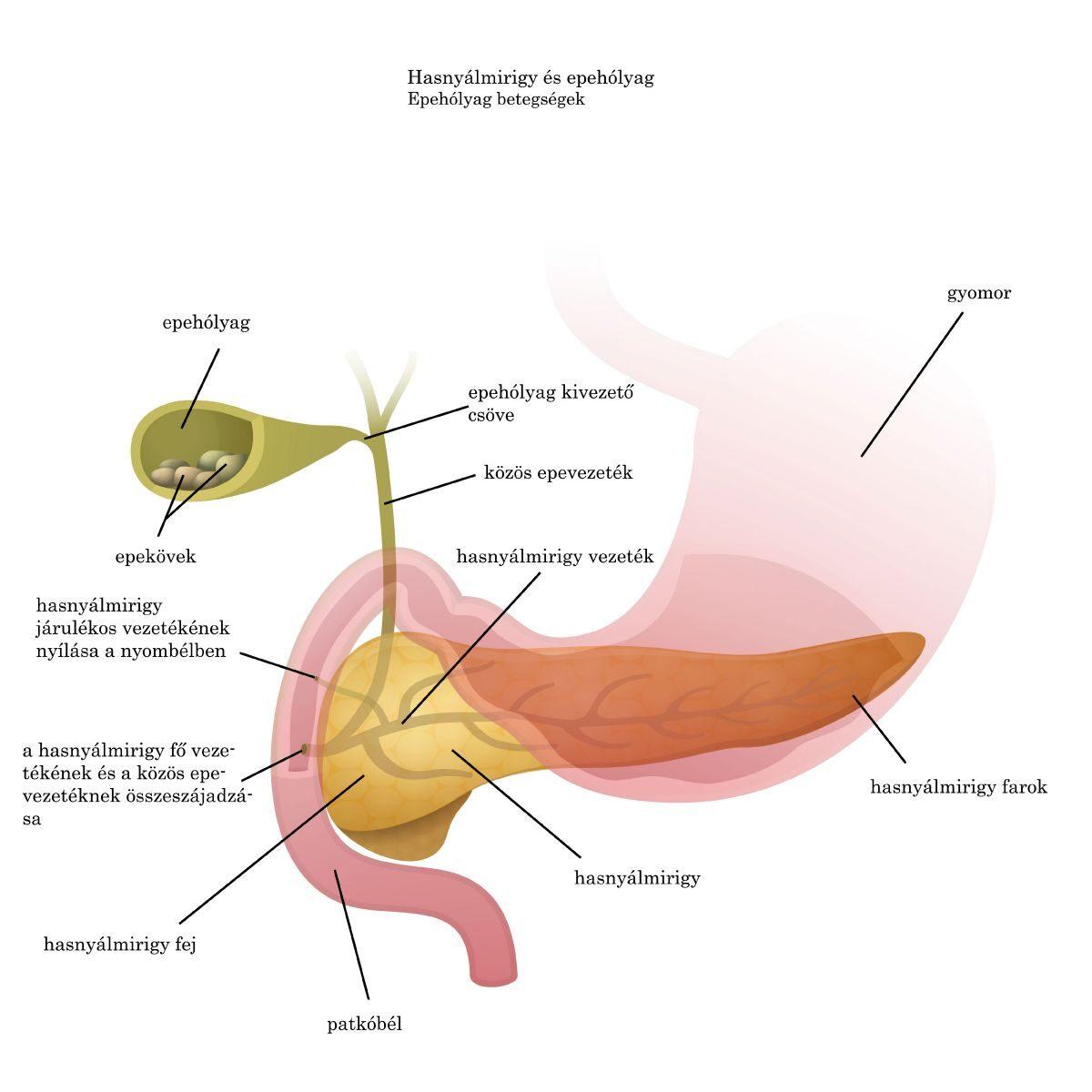 ostorféreg jelei a testben