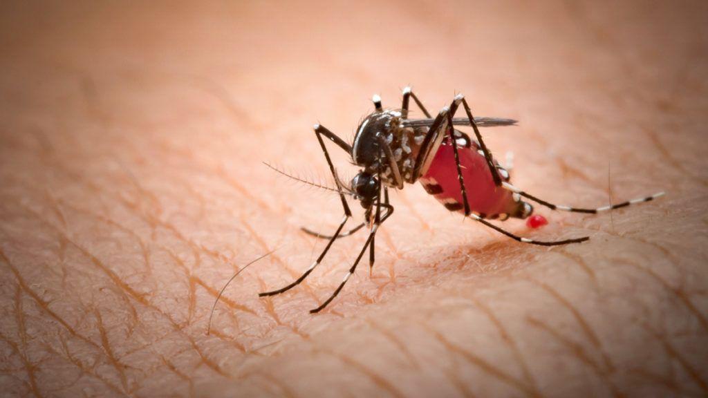 a parazita a bőr alá kerül
