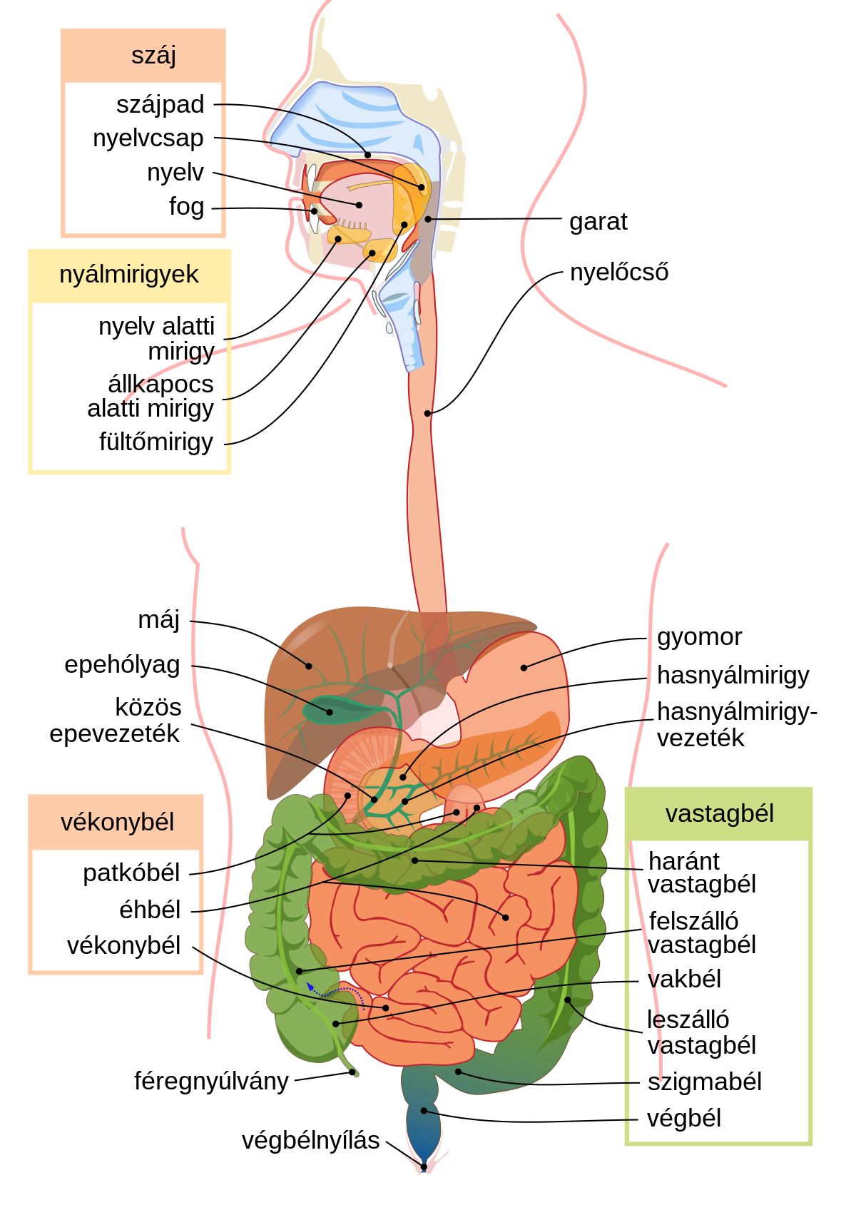 rendszer három parazita